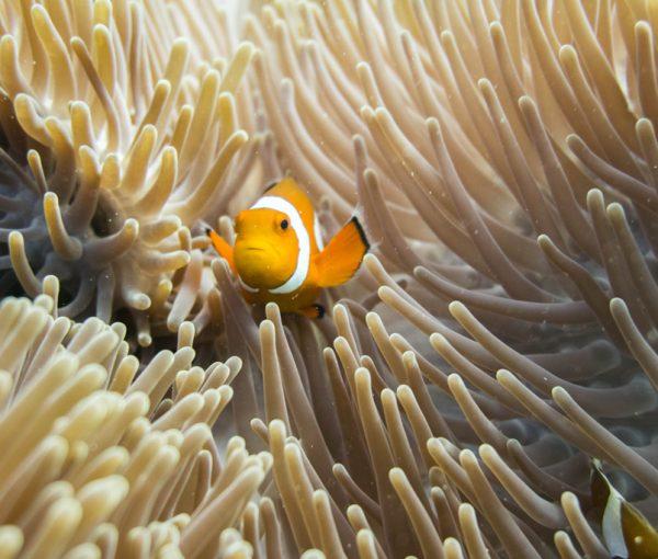 Lo que Gili T. me enseñó sobre el océano