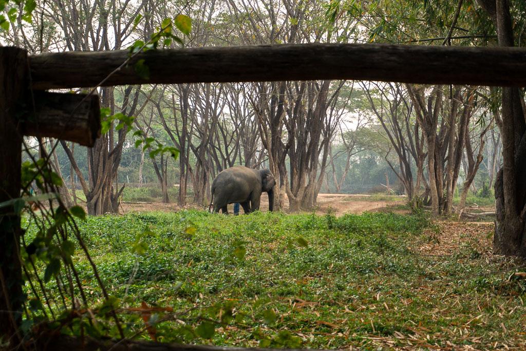 santuario elefantes visita guiada