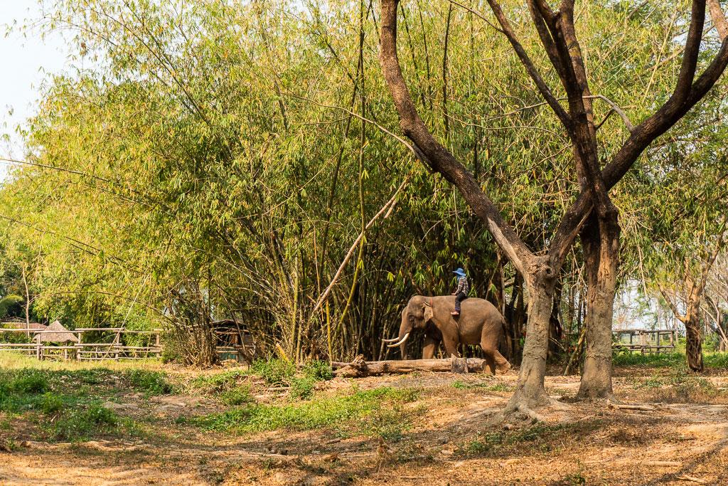 santuario elefantes thong inn