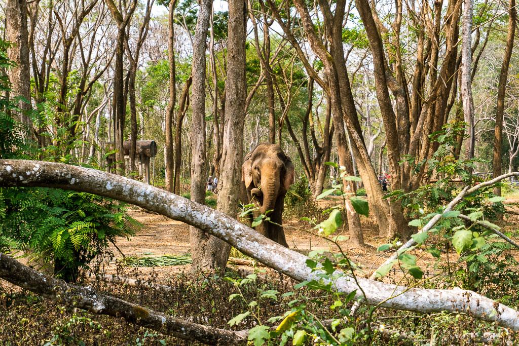 santuario elefantes tailandia