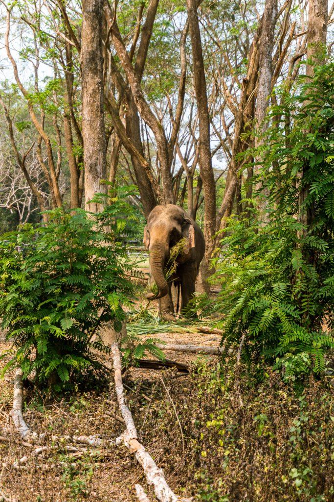 santuario elefantes zach comiendo