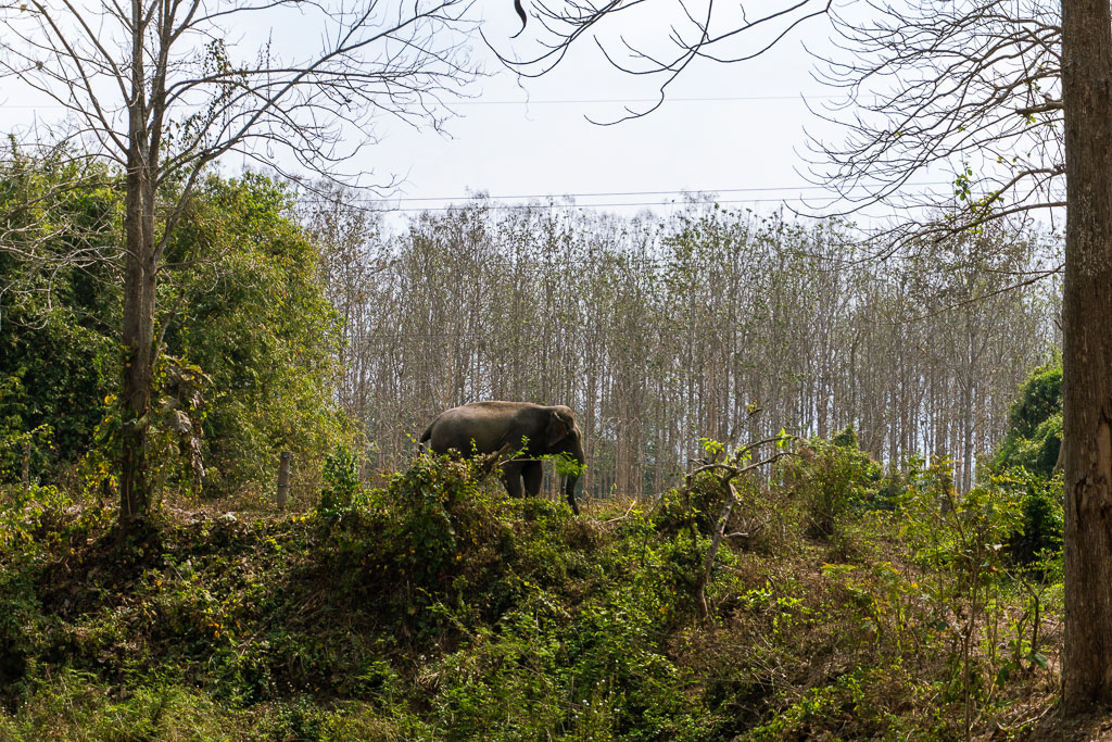 santuario elefantes elephant valley