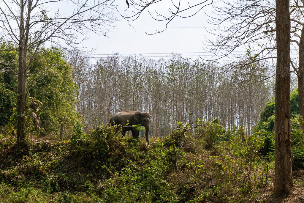 Visita a un santuario de elefantes en Chiang Rai