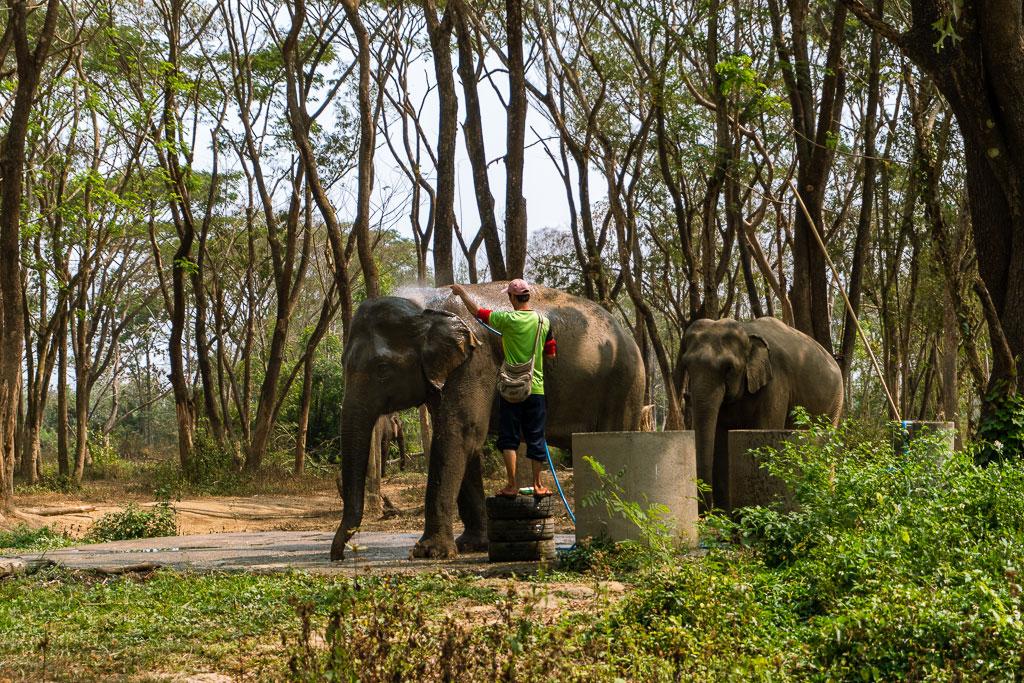 santuario elefantes ducha