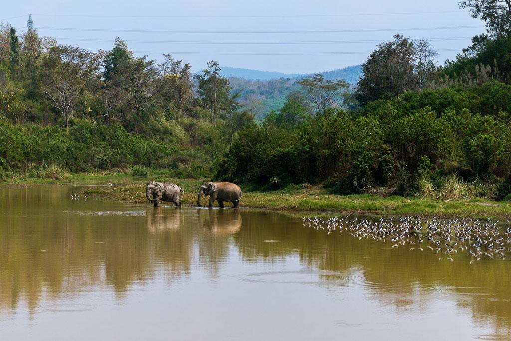 santuario elefantes zona safari