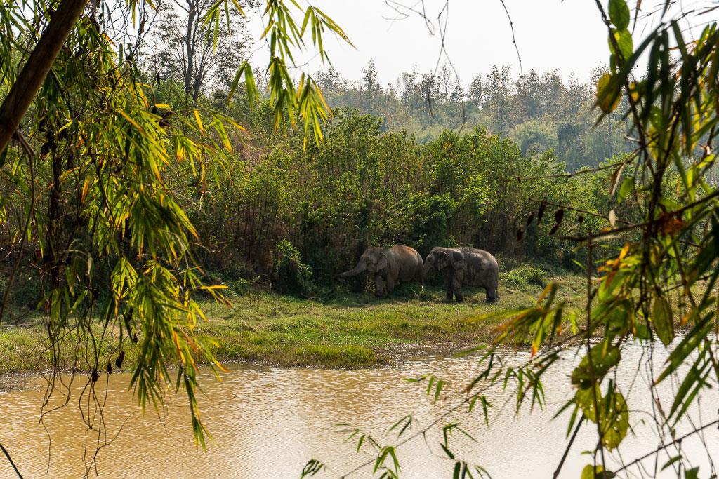 safari elefantes santuario