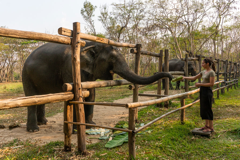 Snack a los elefantes del santuario